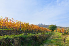 View on vineyards and small house on the hill in Piedmont, Italy Royalty Free Stock Image