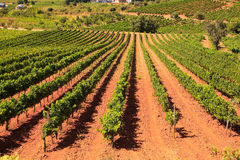 View of vineyards in the Spanish countryside Royalty Free Stock Image