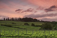 View of the vineyards of Tuscany at sunset. Italy stock photography