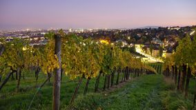 View from vineyards in Vienna at night. Beautiful evening time-lapse in the suburban vineyards of Vienna in autumn. Night cityscape in the background stock footage