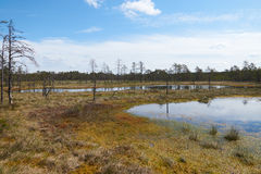 View of the Viru Raba bog with several lakes in Estonia. The gloomy view of the Viru Raba bog with several lakes in summer day in Estonia Stock Photography