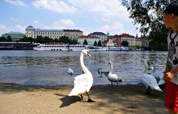 View of Vltava River in Prague Royalty Free Stock Photos