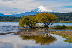 View of Volcan Villarrica from Villarrica itself, Chile Stock Image