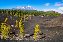 View of the volcano Teide near Arenas Negras. Grandeur nature an. D small man. Teide National Park, Tenerife, Canary Islands, Spain. Artistic picture. Beauty Stock Photo