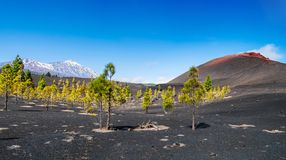 View of the volcano Teide near Arenas Negras. Grandeur nature in. Teide National Park, Tenerife, Canary Islands, Spain. Artistic picture. Beauty world Stock Photo