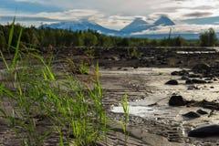 View of volcanoes: Klyuchevskaya Sopka, Bezymianny, Kamen from river Studenaya at dawn. Kamchatka Peninsula. Stock Image