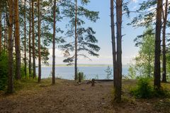 View of the Volga River from the high bank. With a pine forest on a sunny summer day royalty free stock photography