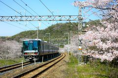 View of Wakayama local train traveling on rail tracks with flourish. View of Wakayama local train traveling on rail tracks with flourishing cherry blossoms stock image