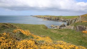 View from Wales Coast Path St Brides Bay Pembrokeshire West Wales UK Royalty Free Stock Photos
