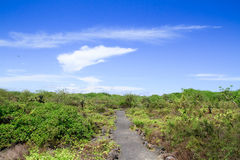 View of the walking tourist trail in the Galapagos Royalty Free Stock Photos