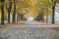 View of walkway and autumn trees in park Royalty Free Stock Photo