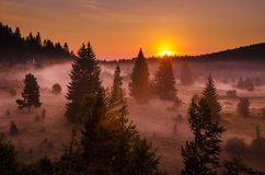 Sunrise over misty pine trees. View of a warm orange sunrise over a foggy field of pine trees royalty free stock photos