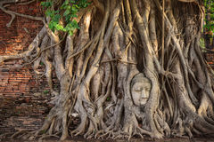 View of Wat Mahathat (Maha That) is located in Ayutthaya Historical Park (UNESCO World Heritage Site). Buddha's head in tree roots at Wat Mahathat (Maha That) Royalty Free Stock Photos