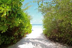 View of the water from the beach between green bushes.  Stock Photography