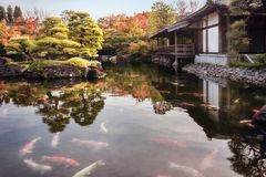 View from the water level at the beautiful Koko-en Garden in autumn. Numerous Koi Fish in the pond in autumn at the beautiful Koko-en Gardens, a classic Edo stock image