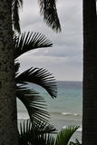 View of water between palm trees. A cloudy day in Jamaica, where you see the ocean with surf, between palm trees royalty free stock photography