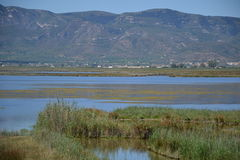 View at water and waterplants in the Delta of  Ebro river in Spain Royalty Free Stock Photo