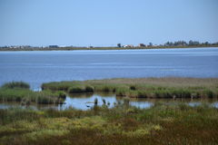 View at water and waterplants in the Delta of  Ebro river in Spain Stock Image