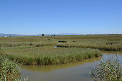 View At Water And Waterplants In River Delta Royalty Free Stock Photos