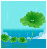 The view of waterdrop Stock Image