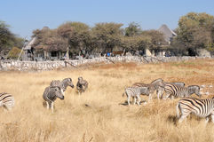 View at the waterhole at the Okaukeujo Rest Camp, Etosha Nationa Royalty Free Stock Images