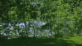 View of waving from wind leaf of green trees at fastly flowing river. Summer sunny day. Nobody. Nature. Timelapse stock footage