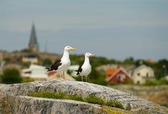Swedish landscape on the west coast Stock Photography