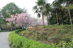 View in West Lake Cultural Landscape of Hangzhou Stock Images