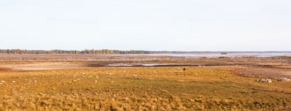 View of a wetland Royalty Free Stock Photo