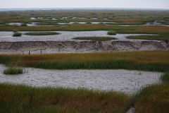 The view of the wetland in the winter. In the winter, the tide turned back the wetland expose discoloration of seaweed, river and land Royalty Free Stock Photography