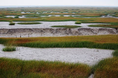 The view of the wetland in the winter. In the winter, the tide turned back the wetland expose discoloration of seaweed, river and land Stock Photo