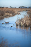 A view of wetlands in Coyote Hills Regional Park Royalty Free Stock Photos