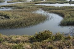 Wetlands of the San Francisco Bay Area Stock Photo
