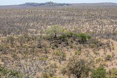 View on wide Kruger landscape, viewpoint stock image