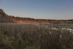 A view of the wide path that runs along the bank of the lake to the forest that illuminated by the light of the setting sun royalty free stock images