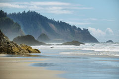 View of wild beach in Oregon Royalty Free Stock Image