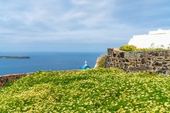 View of wild flowers and Aegean Sea in Oia, Santorini. Greece stock photo