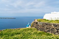 View of wild flowers and Aegean Sea in Oia, Santorini. Greece stock image