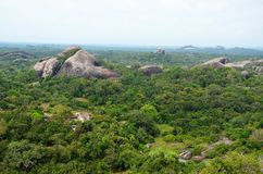 View of wild jungle, Srí Lanka Royalty Free Stock Photo