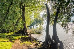 View between willow trees along the river Stock Photo