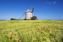 View of Windmill and wheat field Royalty Free Stock Photos
