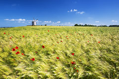 View of windmill and wheat field Royalty Free Stock Images