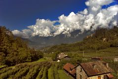 View from the a window. A view of a vinyard in Italy Royalty Free Stock Images