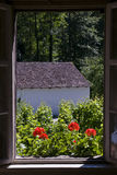 View from the window. Flowers at the window of an old house seen from inside Stock Photo
