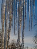 Huge icicles of ice hang from the roof against the blue sky and the treetops. Vertical orientation. royalty free stock image
