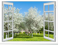 View window flowering tree Stock Images