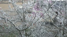 View from the window on Frost tree briar. Briar Berries With Hoarfrost in Frosty Day stock video footage