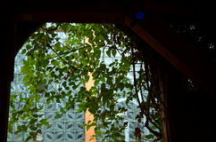 View through a window with hanging plants Stock Image