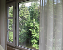 View through window to evergreen trees Stock Photo