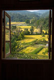 View from window at a wonderful rice terraces with space. For your text Royalty Free Stock Photography